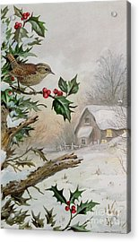 Wren In Hollybush By A Cottage Acrylic Print by Carl Donner