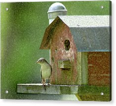 Acrylic Print featuring the photograph Wren by John Hix
