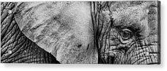 Wrinkles Acrylic Print