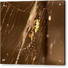 Writing Spider Acrylic Print