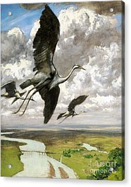 Acrylic Print featuring the painting Wundervogel by Pg Reproductions