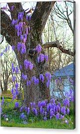 Wysteria Tree Acrylic Print