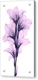 X-ray Of A Gladiola Flower Acrylic Print