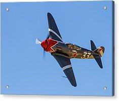 Yak 3 Steadfast Acrylic Print