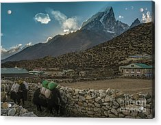 Acrylic Print featuring the photograph Yaks Moving Through Dingboche by Mike Reid