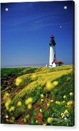 Yaquina Head Lighthouse- V2 Acrylic Print