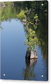 Acrylic Print featuring the photograph Yawkey Wildlife Refuge - Cat Island by Suzanne Gaff