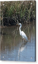 Acrylic Print featuring the photograph Yawkey Wildlife Refuge - Great White Egret II by Suzanne Gaff