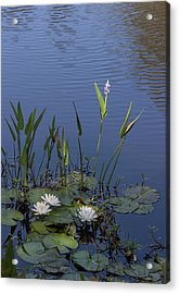 Yawkey Wildlife Reguge Water Lilies With Rare Plant Acrylic Print by Suzanne Gaff