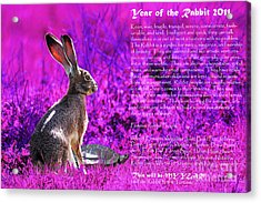 Year Of The Rabbit 2011 . Magenta Acrylic Print by Wingsdomain Art and Photography