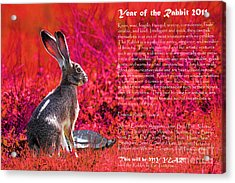 Year Of The Rabbit 2011 . Red Acrylic Print by Wingsdomain Art and Photography