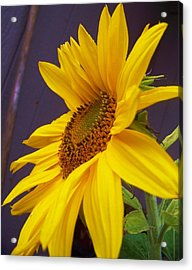 Yearning For Sunshine Acrylic Print by Angi Parks