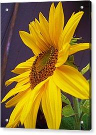 Yearning For Sunshine Acrylic Print