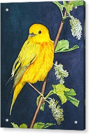 Yelllow Warbler Acrylic Print by Sharon Farber