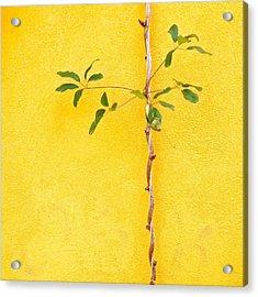 Yellow #2 Acrylic Print