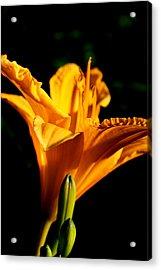 Yellow Acrylic Print by Alexandra Harrell