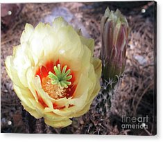 Yellow Alicoche Acrylic Print