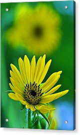 Yellow And Green 3 Acrylic Print by Peter  McIntosh