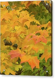 Acrylic Print featuring the photograph Yellow And Green Fall Leaves by Michael Flood