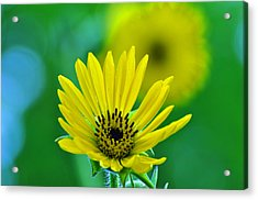 Yellow And Green Acrylic Print by Peter  McIntosh