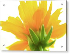 Acrylic Print featuring the photograph Yellow And Green by Roger Mullenhour
