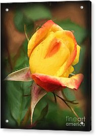 Yellow And Orange Rosebud Acrylic Print by Smilin Eyes  Treasures