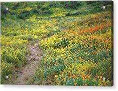 Acrylic Print featuring the photograph Yellow And Orange Wildflowers Along Trail Near Diamond Lake by Jetson Nguyen
