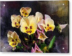 Yellow And Pink Pansies Acrylic Print