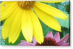 Yellow And Purple Acrylic Print by Krista Barth
