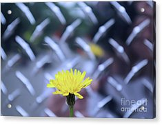 Yellow And Silver Acrylic Print