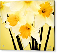 Yellow And White Daffodils. Acrylic Print