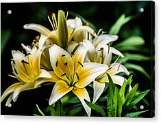 Yellow And White Lilys Acrylic Print