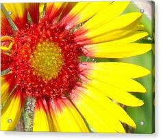 Yellow Acrylic Print by Angela Christine