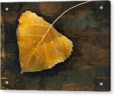 Yellow Autumn Leaf Acrylic Print