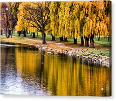 Yellow Autumn Acrylic Print