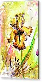 Yellow Bearded Iris And Bees Acrylic Print