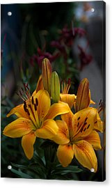Acrylic Print featuring the photograph Yellow Beauties by Cherie Duran