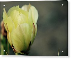 Acrylic Print featuring the photograph Yellow Beauty by Amee Cave