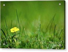 Acrylic Print featuring the photograph Yellow Beauty by Kennerth and Birgitta Kullman