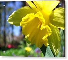 Acrylic Print featuring the photograph Yellow Beauty by Maciek Froncisz