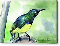 Yellow Bellied Sunbird Acrylic Print
