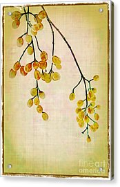 Yellow Berries Acrylic Print