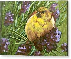 Acrylic Print featuring the painting Yellow Bird by Karen Ilari