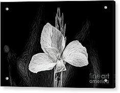 Yellow Black And White Acrylic Print
