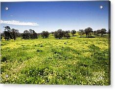 Acrylic Print featuring the photograph Yellow Blanket by Douglas Barnard