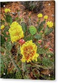 Yellow Bloom Acrylic Print
