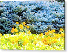 Yellow, Blue, Orange Acrylic Print