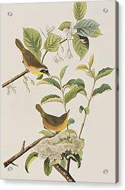 Yellow-breasted Warbler Acrylic Print by John James Audubon