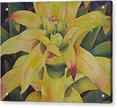 Yellow Bromeliad Acrylic Print by Judy Mercer