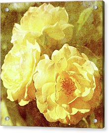 Yellow Bunch Vintage Acrylic Print by Cathie Tyler
